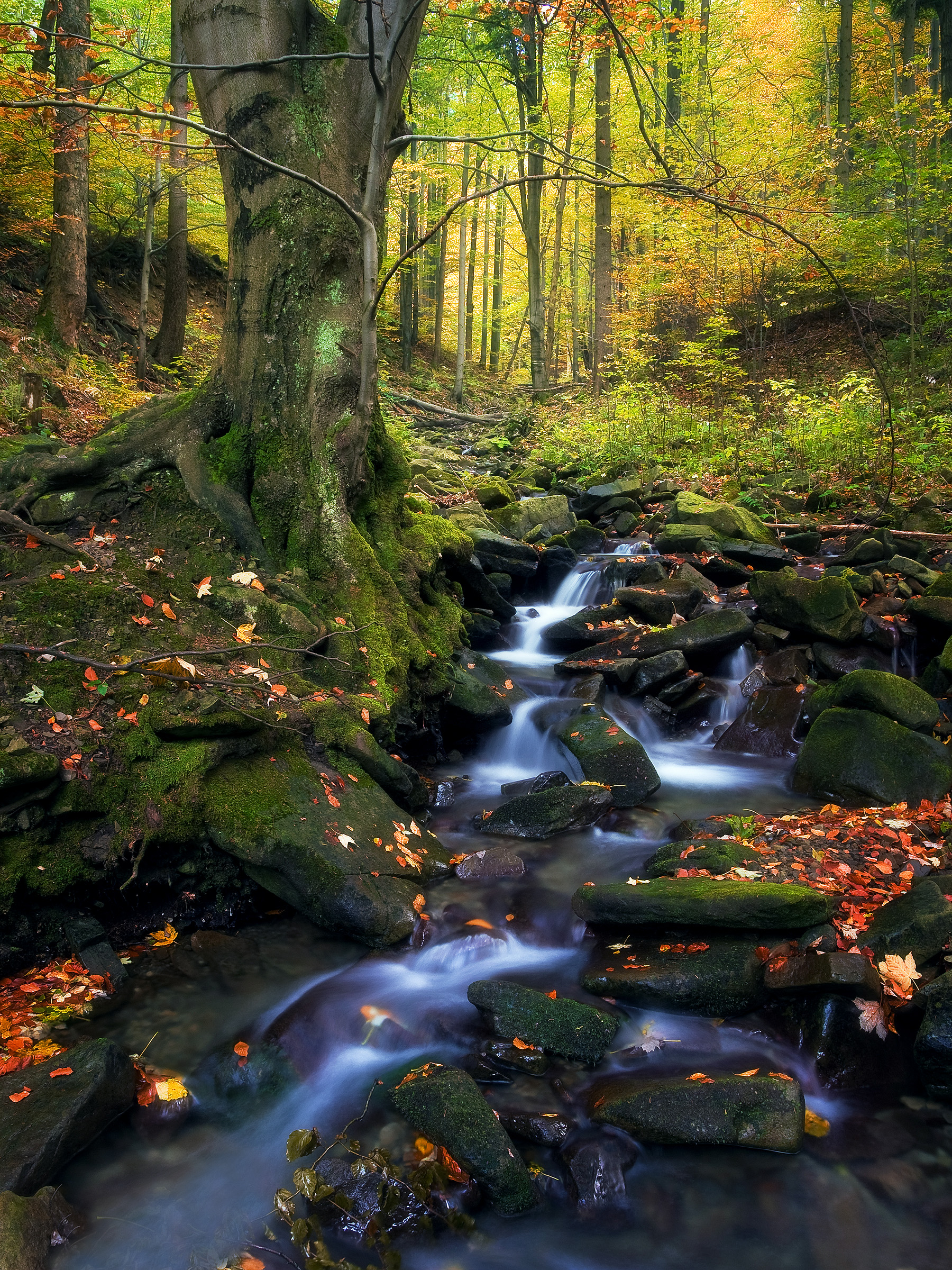 Autumn Forest with Waterfalls