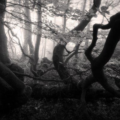 Gnarled Forest