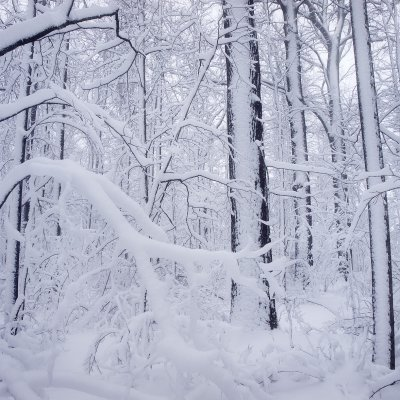 Floodplain Forest in Snow