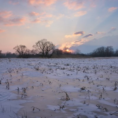 Winter Evening on Meadows