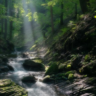 Waterfalls in Forest with Sunlight