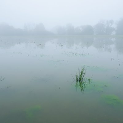 Algae in the Flooded Meadows