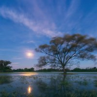 Moonset, Gale, Flooded Meadows