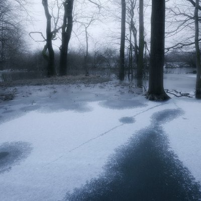 Flooded Forest in Winter