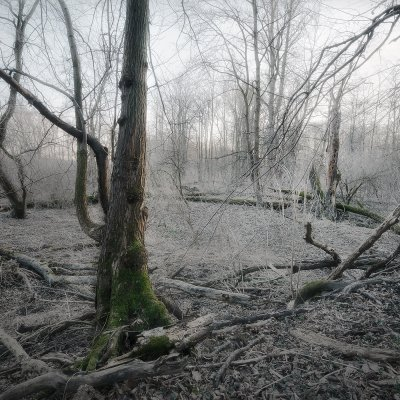 Old Forest near Odra River